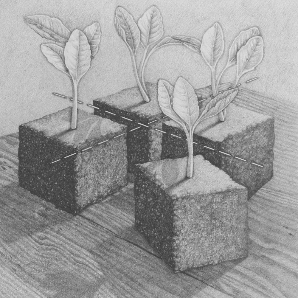 Kalendarium Hortense, divide.jpg