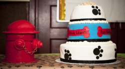 Bow Wow Bingo Cake, Louie's Legacy, Pet Photography, Staten Island, NY