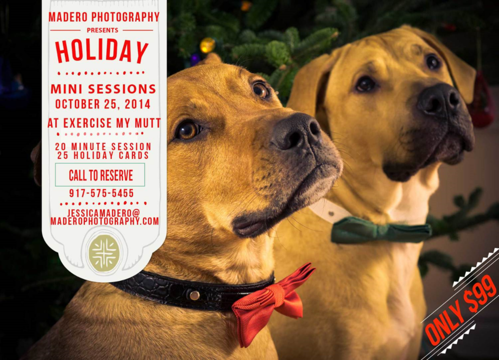Pet Photography, Christmas Mini Sessions
