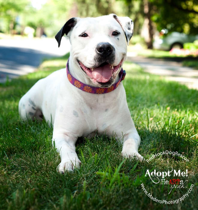 New Jersey Pet Photographer, Red Hook Dog Rescue, Helen
