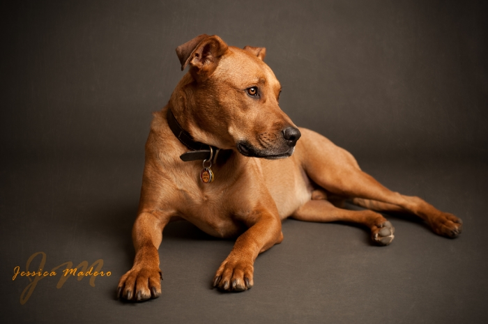 Staten Island Family Photographer, Jameson, New York Pet Photographer