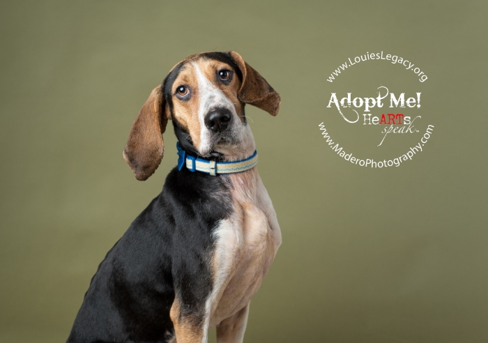 FoxHound, Pet Photographer Staten Island