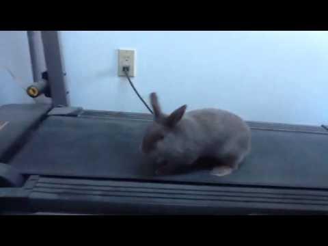 Cardio bunny. Hop. Hop. Hop. Image via Google images.