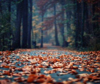 201209-w-fall-foliage-swarzedz-poland.jpg
