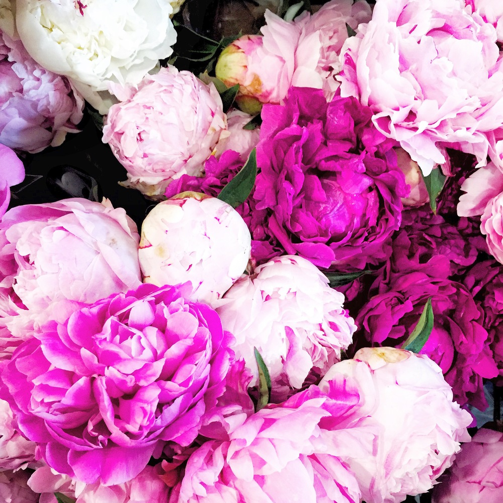Peonies | Living Minnaly