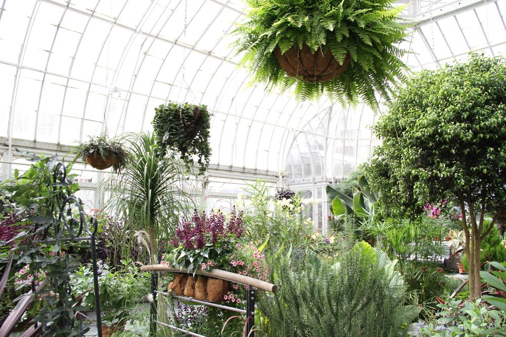 Westmount Library Botanical Garden