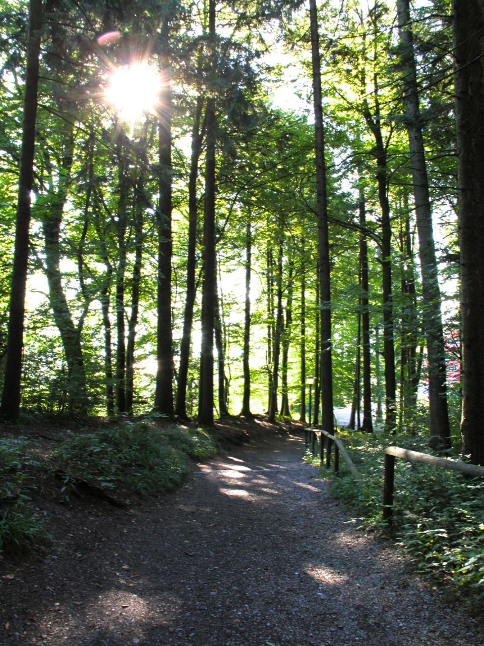 Felsenegg-Uetliberg| Living Minnaly04.jpg