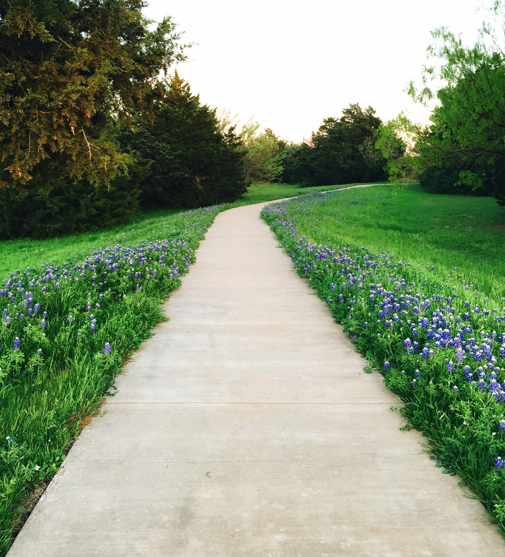 Bluebells in Dallas | Living Minnaly