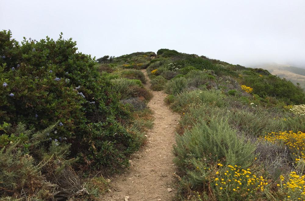 California Coast | Living Minnaly09.jpg
