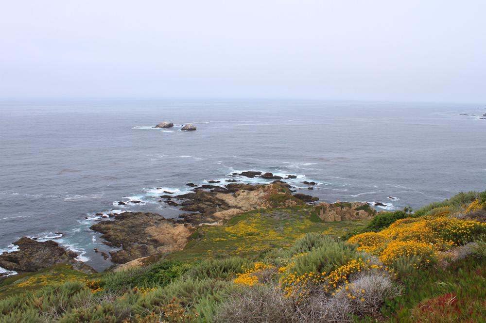 California Coast | Living Minnaly11.jpg