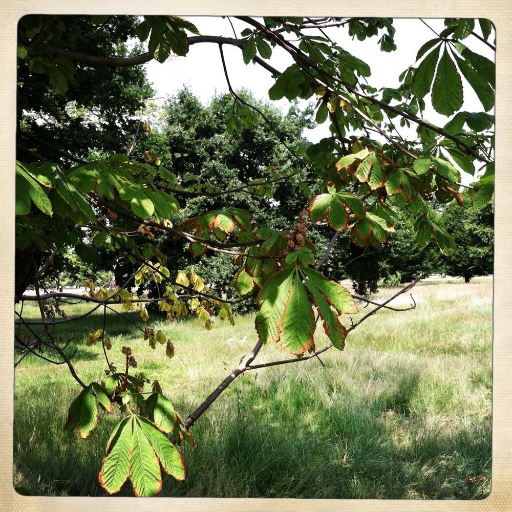 kensington_gardens89.jpg