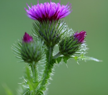 Milk Thistle Extract is one of the few treatments.