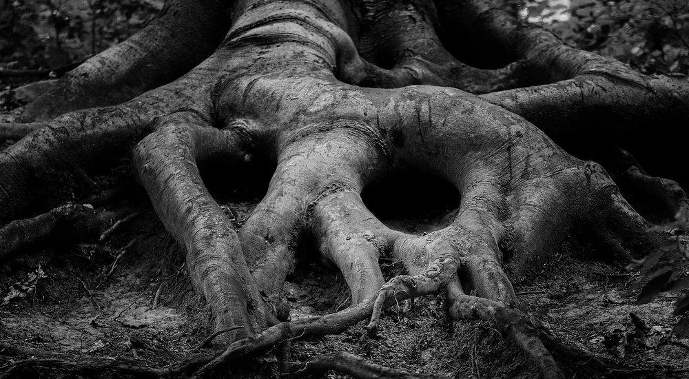 tree-2845119_1280.jpg