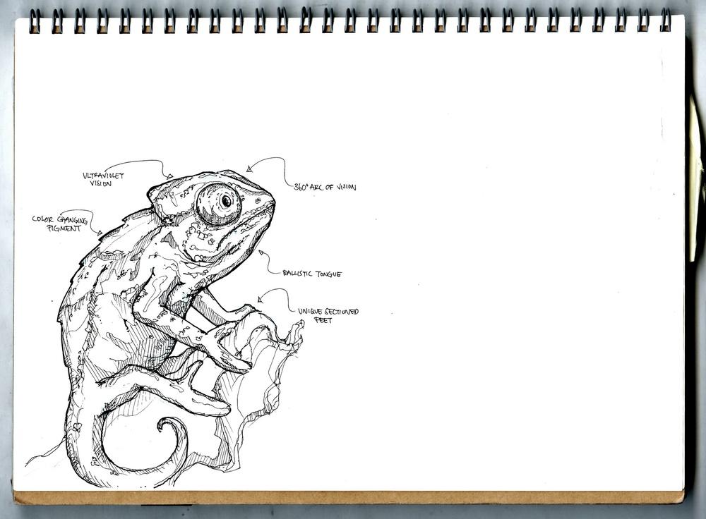 Chameleon Sketch 2.jpg
