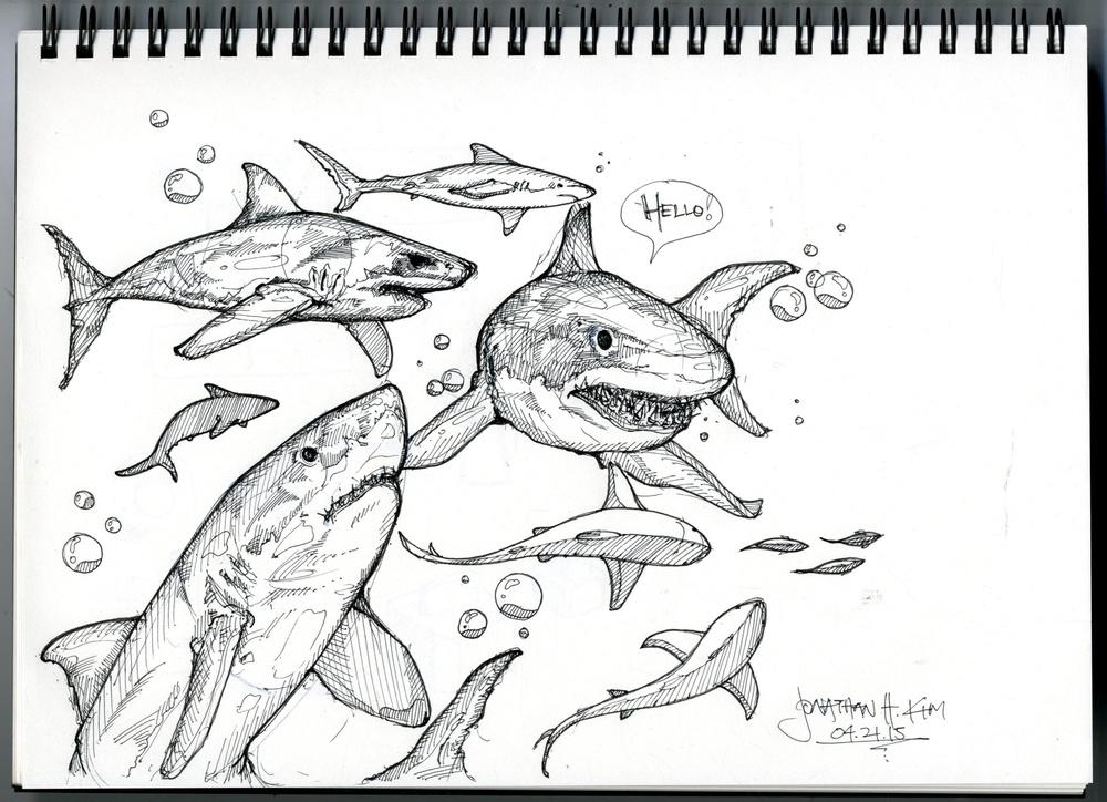 Shark Sketch.jpg