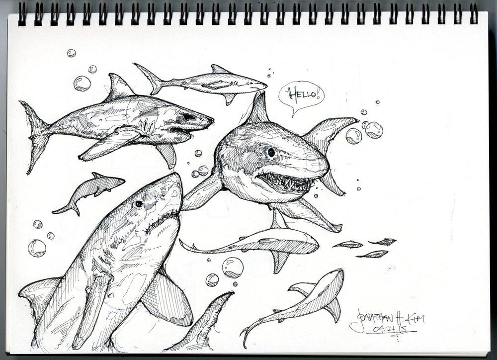 Shark+Sketch.jpg