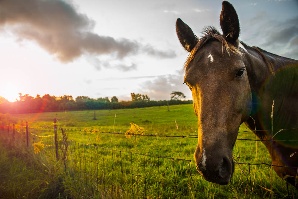 Horse at Sunrise with Sun Flare