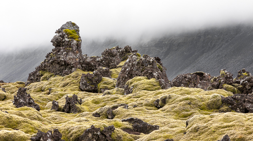 Iceland is largely covered by lava and moss. Every lava field is unique.