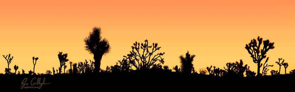 Sunrise Silhouette in Joshua Tree