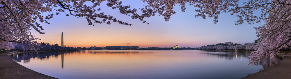 Dawn Cherry Blossoms at the Tidal Basin - Washington DC