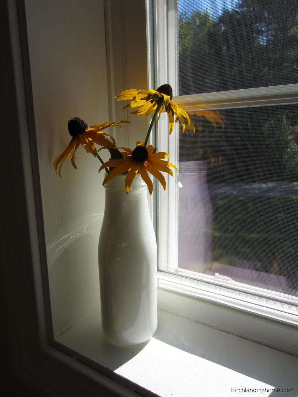 Starbucks country milk bottle vase on a sunny windowsill
