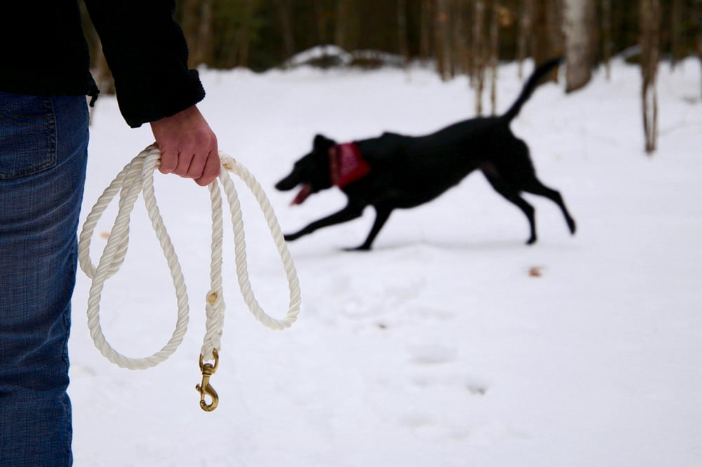Happy black lab running, Mariner Lines dog leash made in Maine