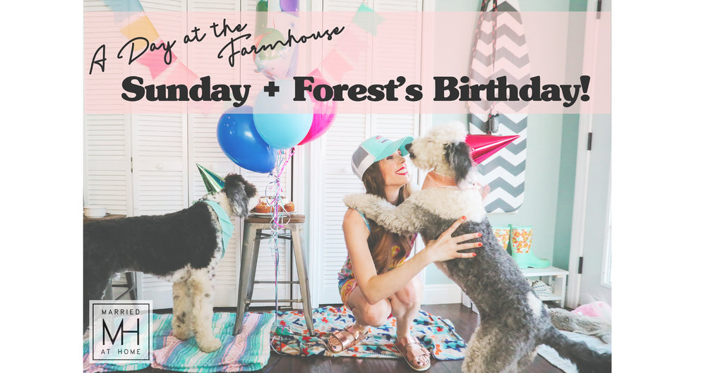 Our Dogs' Birthday Party!   Married At Home