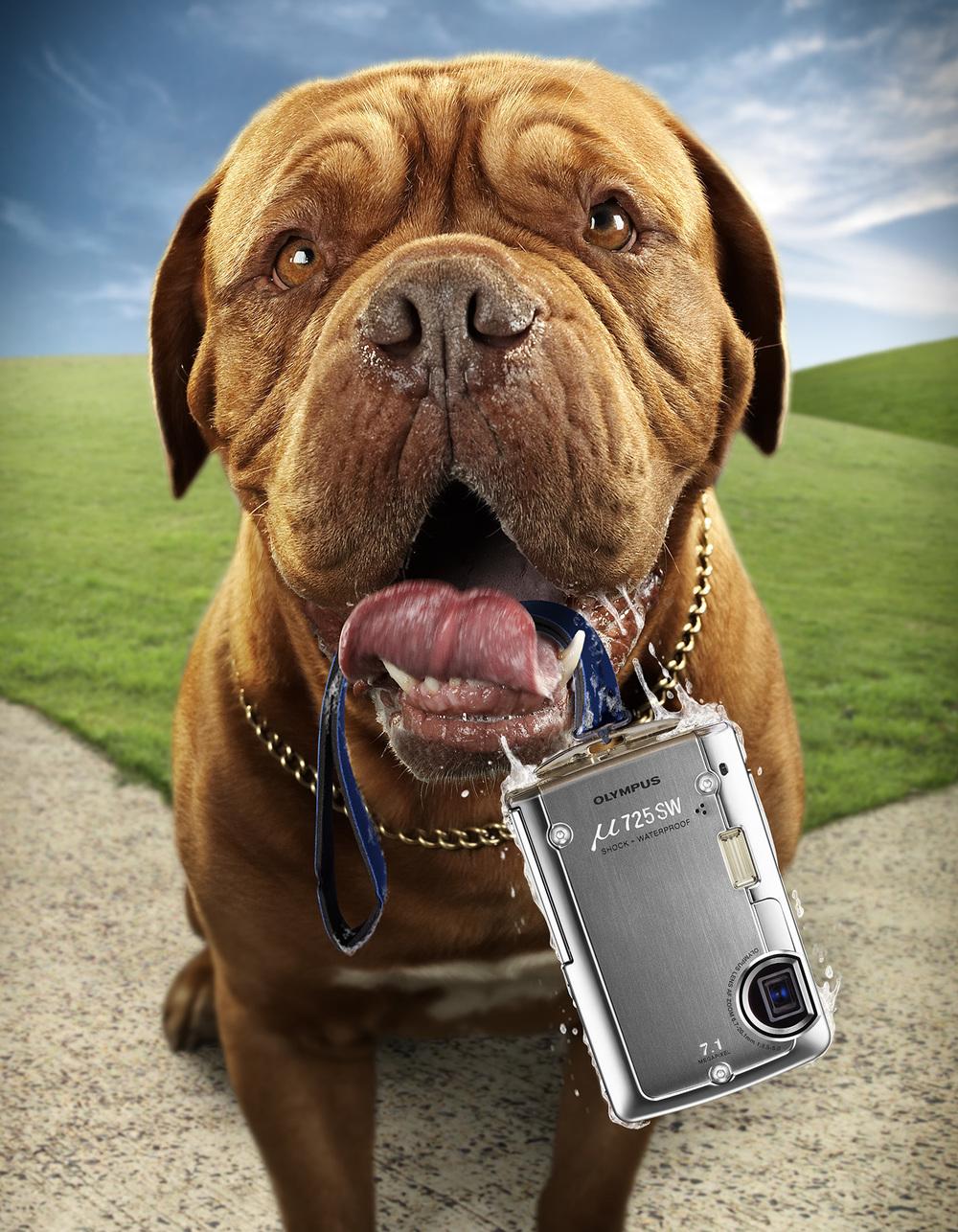 Olympus Tough cameras