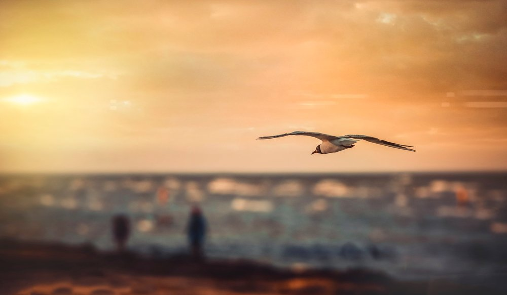hope_bird.jpg