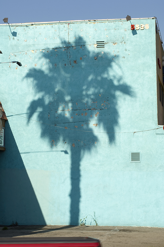 Palm Shadow, 2011