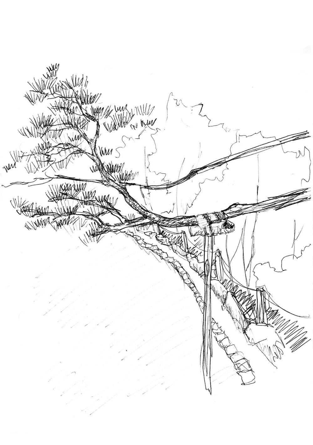 OBSERVATION SITE: Roan-ji龍安寺 - Pictured left: The branch of a pine tree reaches out to meet the path – the branch has been carefully protected and supported and takes up quite a lot of path space. The support material blends into the environment both in colour and structure.