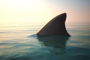 sharke2