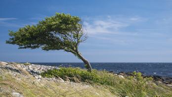 res_tree