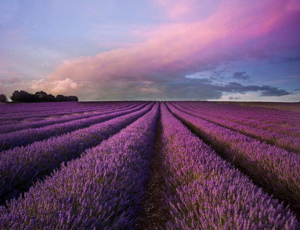 lavendar sunset UCM