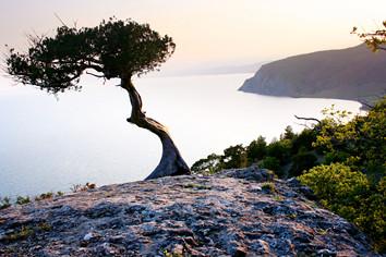 tree bending.jpg