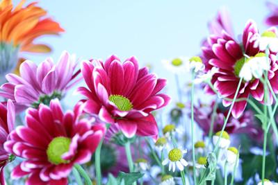 june 3 flowers.jpg