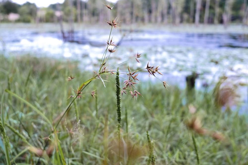 DSCF0437_flora.JPG