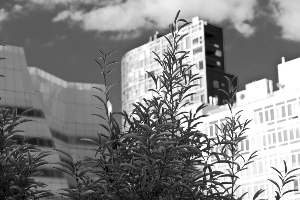 High Line, New York 2014