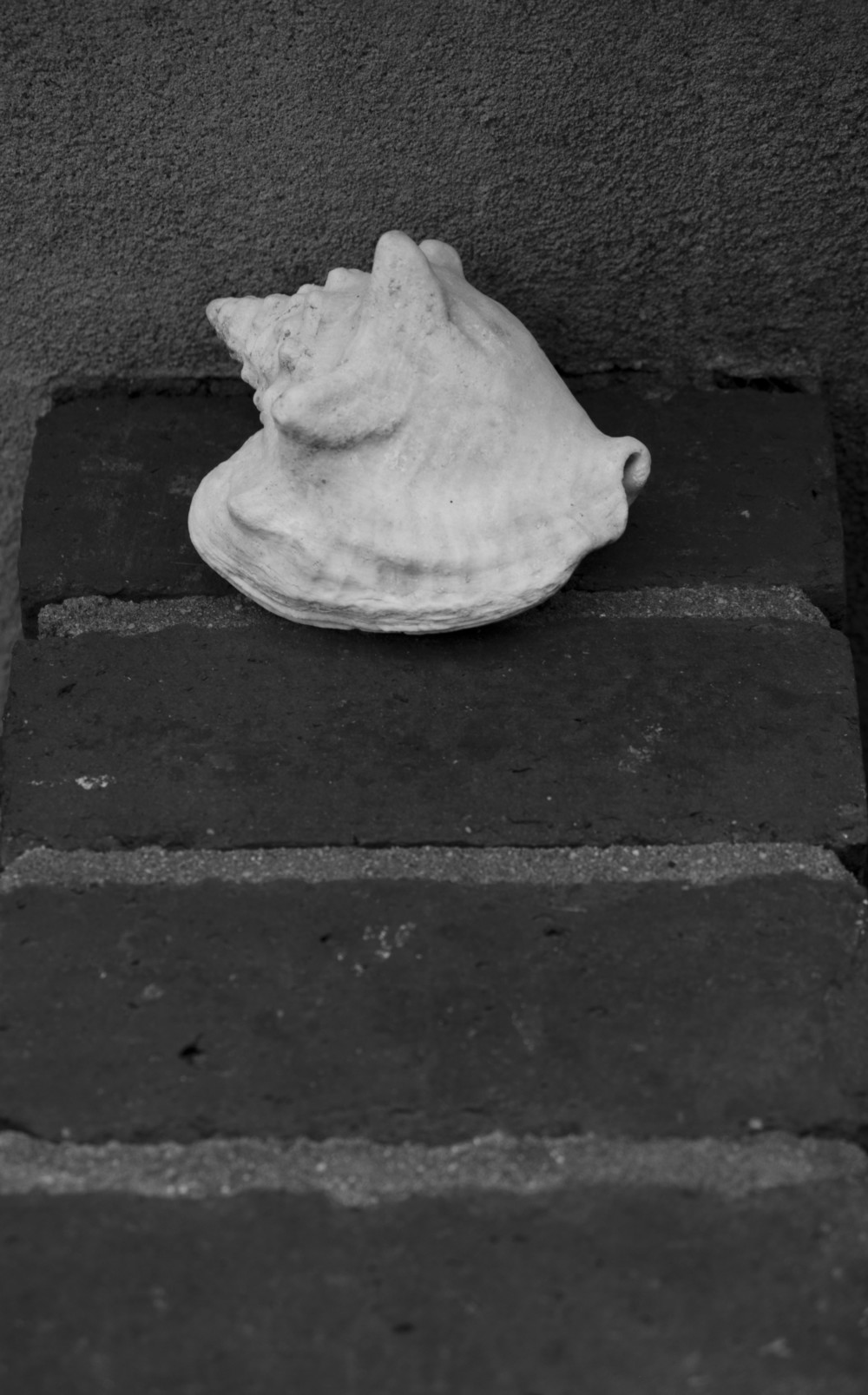 3October2014r_071_shell1bw.JPG