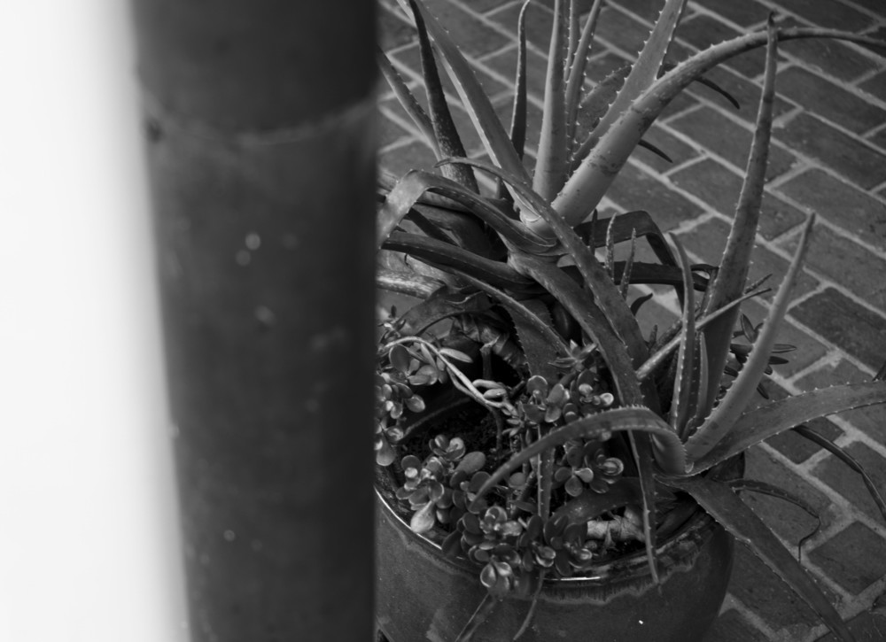 3October2014r_073_pot1bw.JPG
