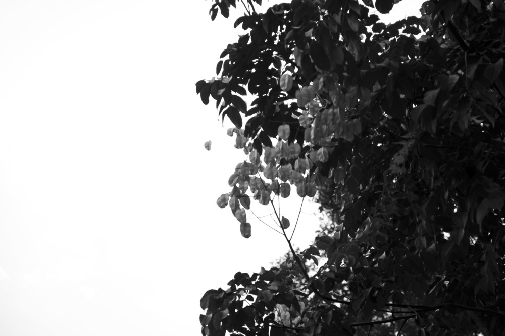 3October2014r_079_tree1bw.JPG
