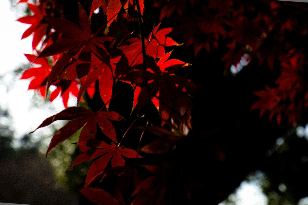 lanscape_dec2014_leaves.JPG