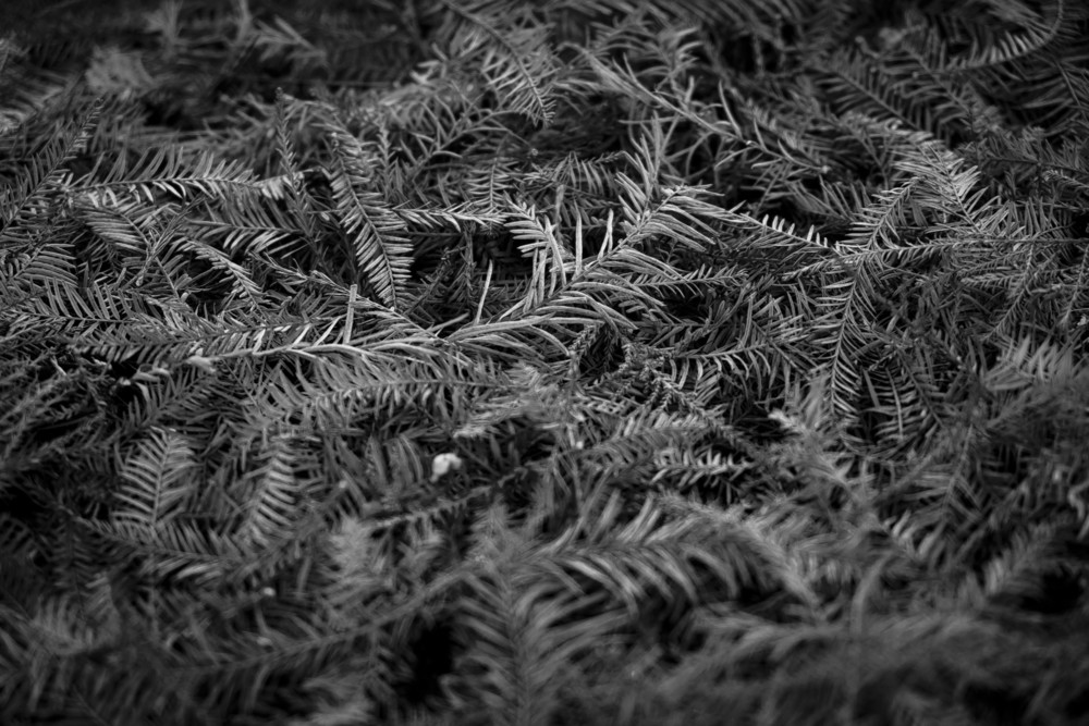 lanscape_dec2014_pine.JPG