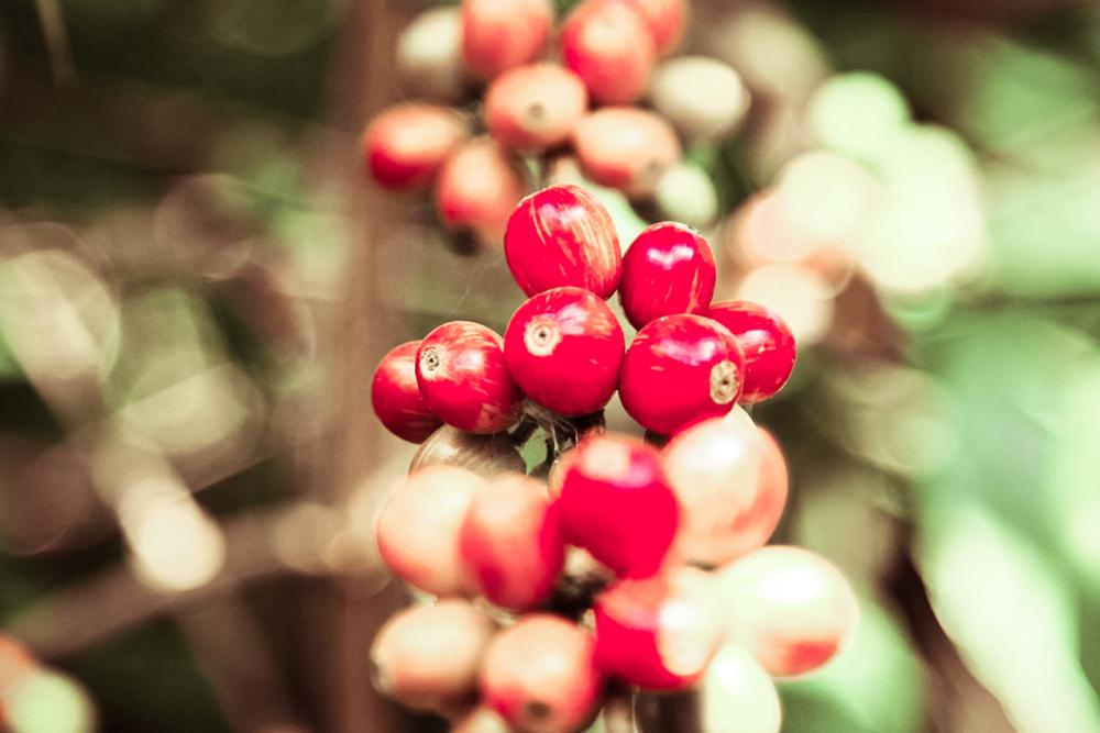 red-cherry-2.jpg
