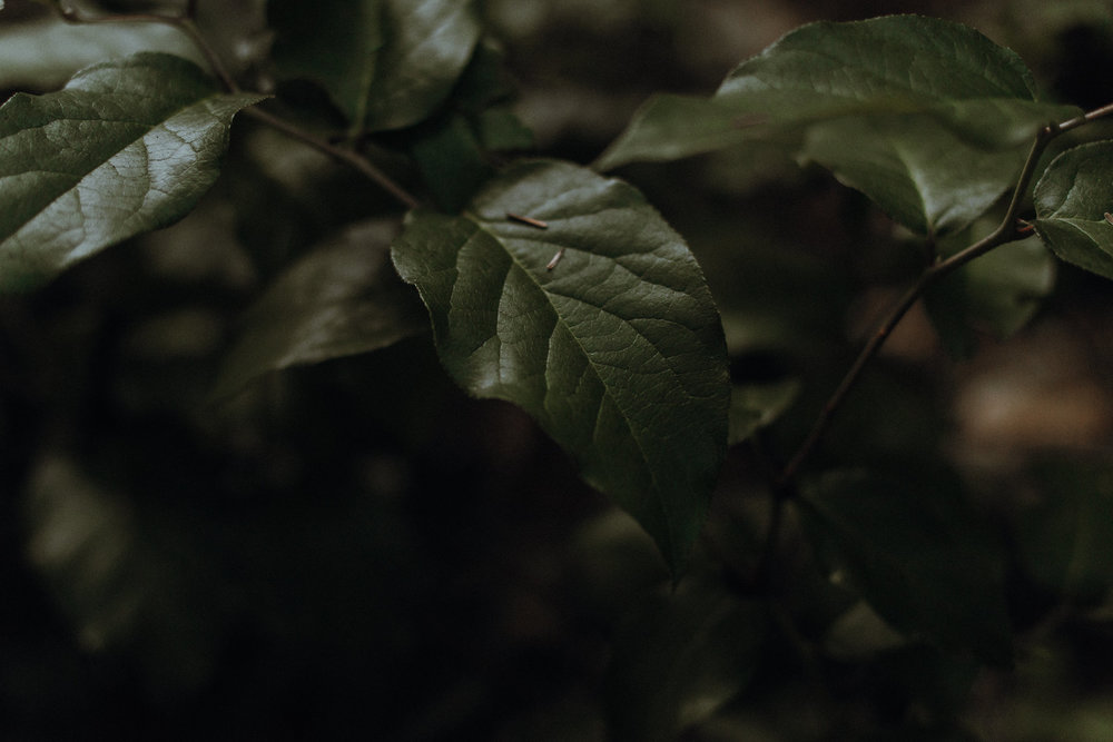 Close up of light on leaf.