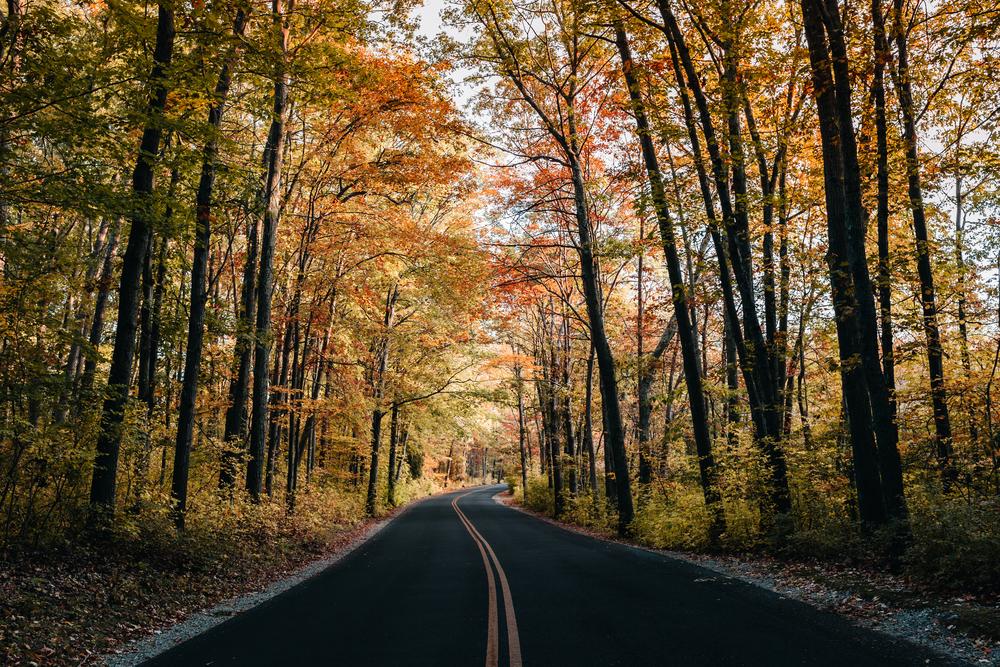 road trip-1.jpg
