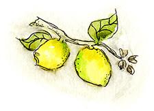 watermarc lemons