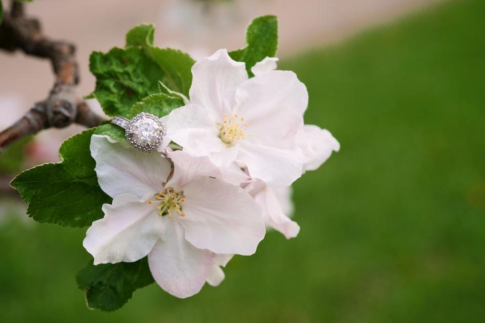 maddie-mae-photo-maddiemaephoto-maddie-mae-photography-madeleine-wilbur-apple-tree-blossom-spring-engagement-shoot-photoshoot-lone-hawk-farms-engagement-wedding-longmont-colorado-photographer 11