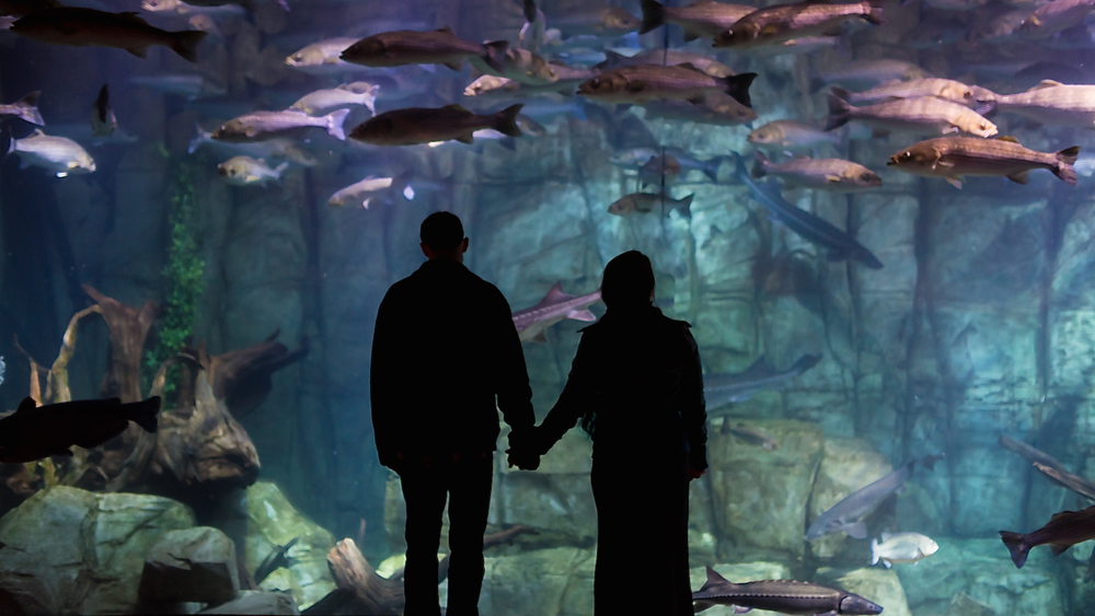 Couple holding hands at an aquarium during their aquarium engagement photoshoot - Photo by Maddie Mae Photography