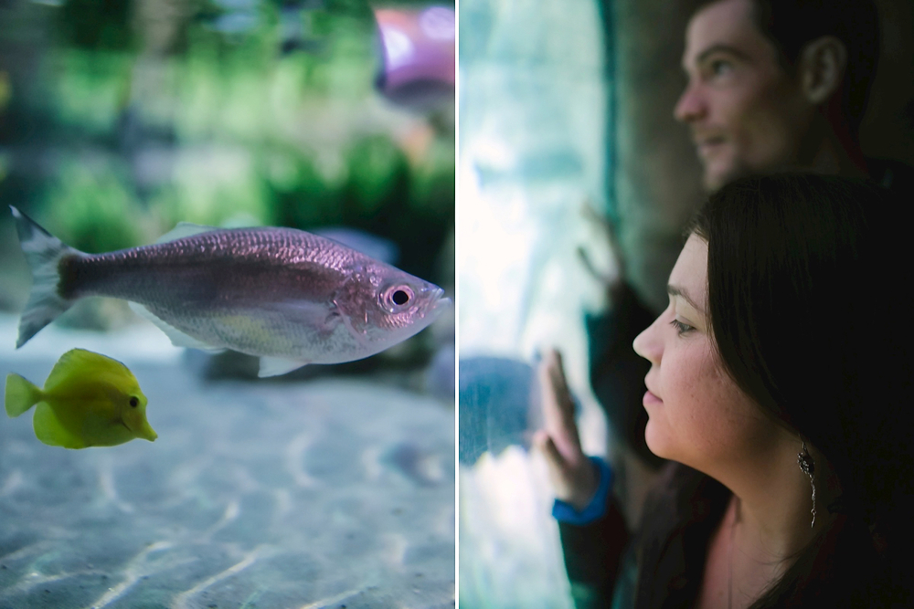 Ocean-themed aquarium engagement photos by Maddie Mae Photography